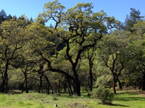 Oak Meadow