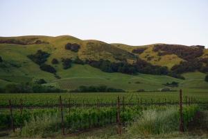 Sonoma landscape